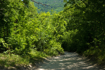 Beautiful green forest, summer nature