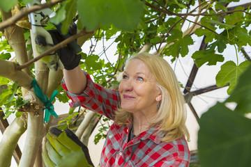 Caucasian woman gardening in greenhouse