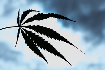 Silhouette of marijuana leaf against the background of contrasting sky.