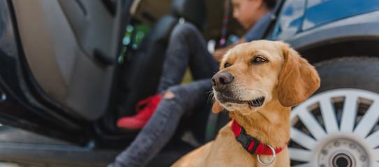 Dog sitting by the car