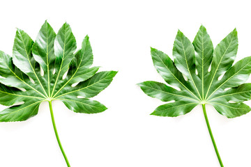 Pattern of exotic plant's leafs on white background top view copyspace