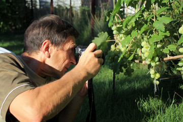 Man photographing bunch of grapes in garden.