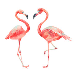 Pink flamingo bright classic nature collection isolated on white