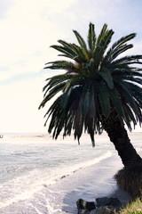 Stattliche Palme am Pazifik, Malibu