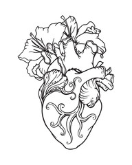 Stylized anatomical Human Heart drawing. Heart with white lilies in romantic style.