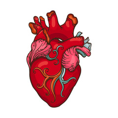 Drawing of stylized Human Heart