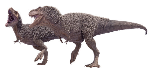 A 3D rendering of a Tyrannosaurus Rex mating pair, isolated on a white background.
