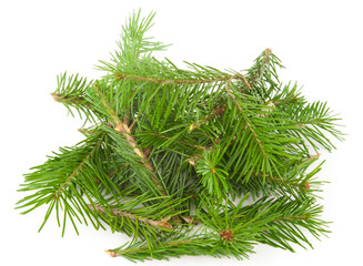 A pile of fir branches