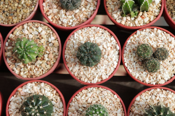 Variety of beautiful Cactus Desert Nature Green for background and desktop wallpaper. Growing plants like cactus with low light and water requirements are profitable business for entrepreneurs.