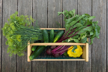 Dill, cucumbers,beets with attached greens, zucchini and yellow pattypan summer squash in a wood and wire basket or hod. Photographed on weathered wood planks.