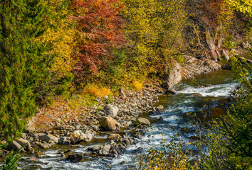 powerful forest brook with rocky shore
