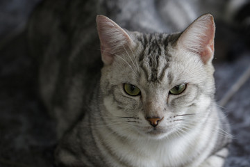 Image of a lovely cat. Pet Animal.