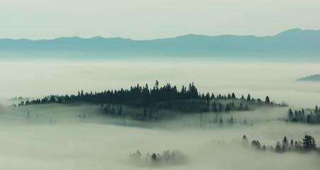 Poster Morning with fog Foggy morning in Tatra mountains, Zakopane, Poland