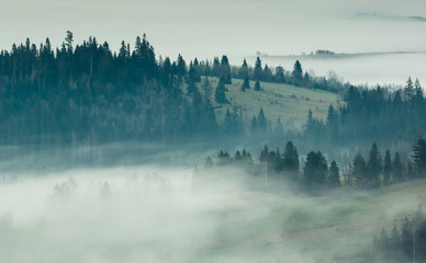 Spoed Fotobehang Ochtendstond met mist Foggy morning in Tatra mountains, Zakopane, Poland