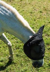 Printed roller blinds Horses Serie Dordogne Frankrijk-paard