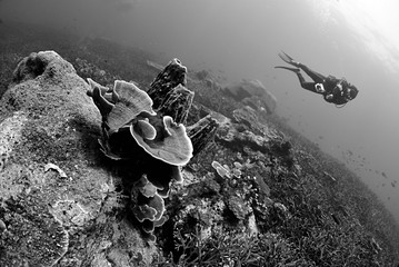 Scuba diver explore in Staghorn Coral reef, Black and white photo