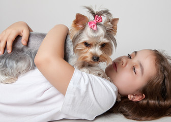 Girl hugging a dog breed Yorkshire Terrier lying on white background