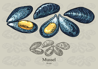 Mussels. Vector illustration for artwork in small sizes. Suitable for graphic and packaging design, educational examples, web, etc.