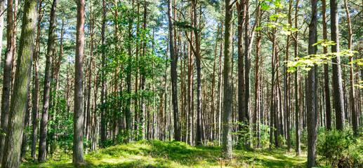 Summer forest landscape and summer forest background