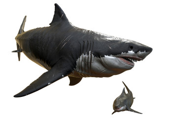 3D rendering of two Megalodons isolated on a white background.