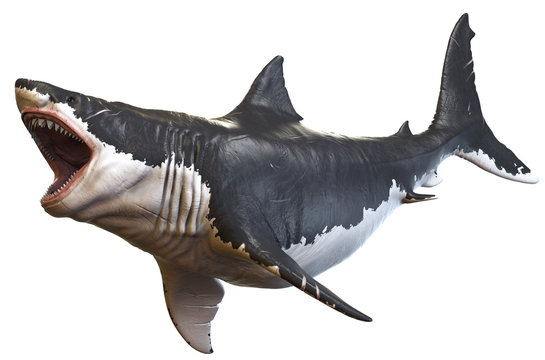 3D rendering of Megalodon isolated on a white background.