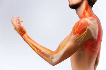 Illustration of the human arm anatomy representing nerves, bones and ligaments. Wall mural