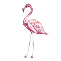 Pink flamingo watercolor illustration isolated on white background.