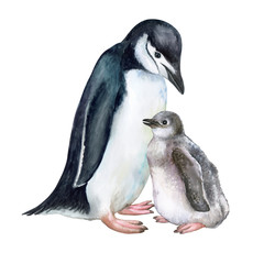 Arctic penguins isolated on white background. Mother with a child. Mothers Day. Suitable for postcards, books, printing. Illustration. Watercolor