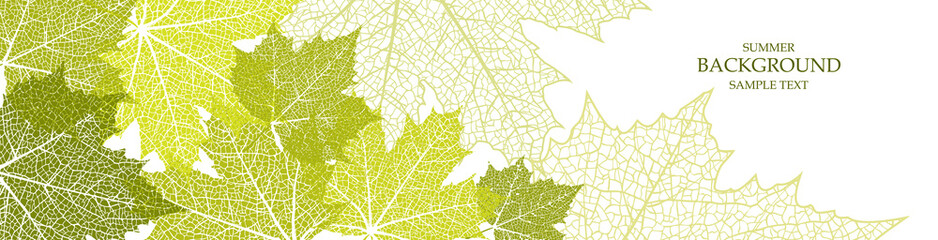 Summer banner and leaves of a maple