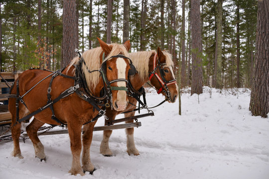 Winter Horse sleigh