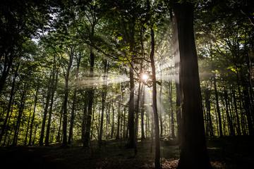forest haze sun