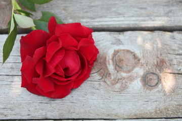 The rose lies on a wooden covering
