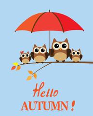 Vector Owl Family