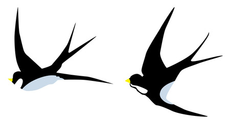 Vector Swallow Birds