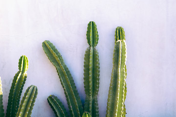 Garden Poster Cactus Minimal Cactus