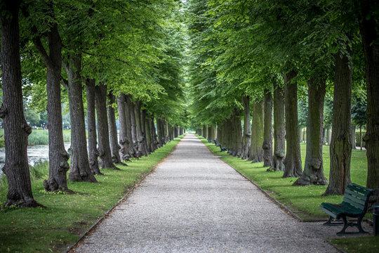 Allee in den Herrenhäuser Gärten in Hannover