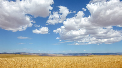 Poster Taupe Monaro Grasslands wide open view