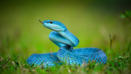 Blue, Pretty and Dangerous