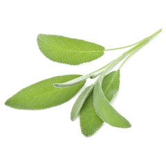 Fototapete - Sage leaves isolated on white background cutout.