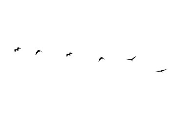 silhouette group of birds isolated on white background
