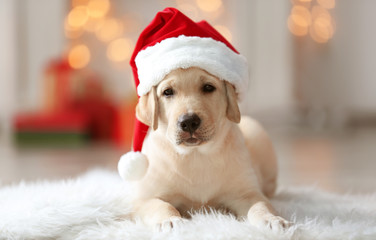 Cute dog in Santa Claus hat lying on fluffy rug at home