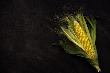 One ripe corn on concrete background