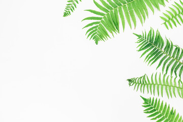 Floral frame of green fern leaves on white background, Flat lay, Top view
