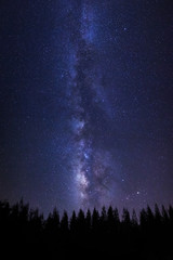 Beautiful milkyway and silhouette of pine tree on a night sky with stars and space dust in universe