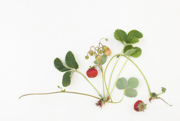 Strawberries with leaves and berries on a white