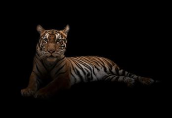 Deurstickers Panter female bengal tiger in the dark