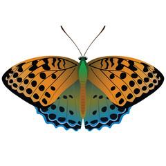 Векторный рисунок яркая оранжевая с синим бабочка