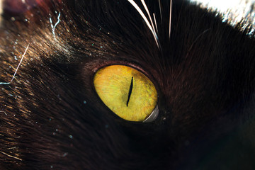 Green eye of a black cat macro closeup