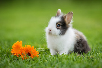 Little rabbit with flowers in summer