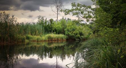 Заболоченная область озера с водными растениями на воде